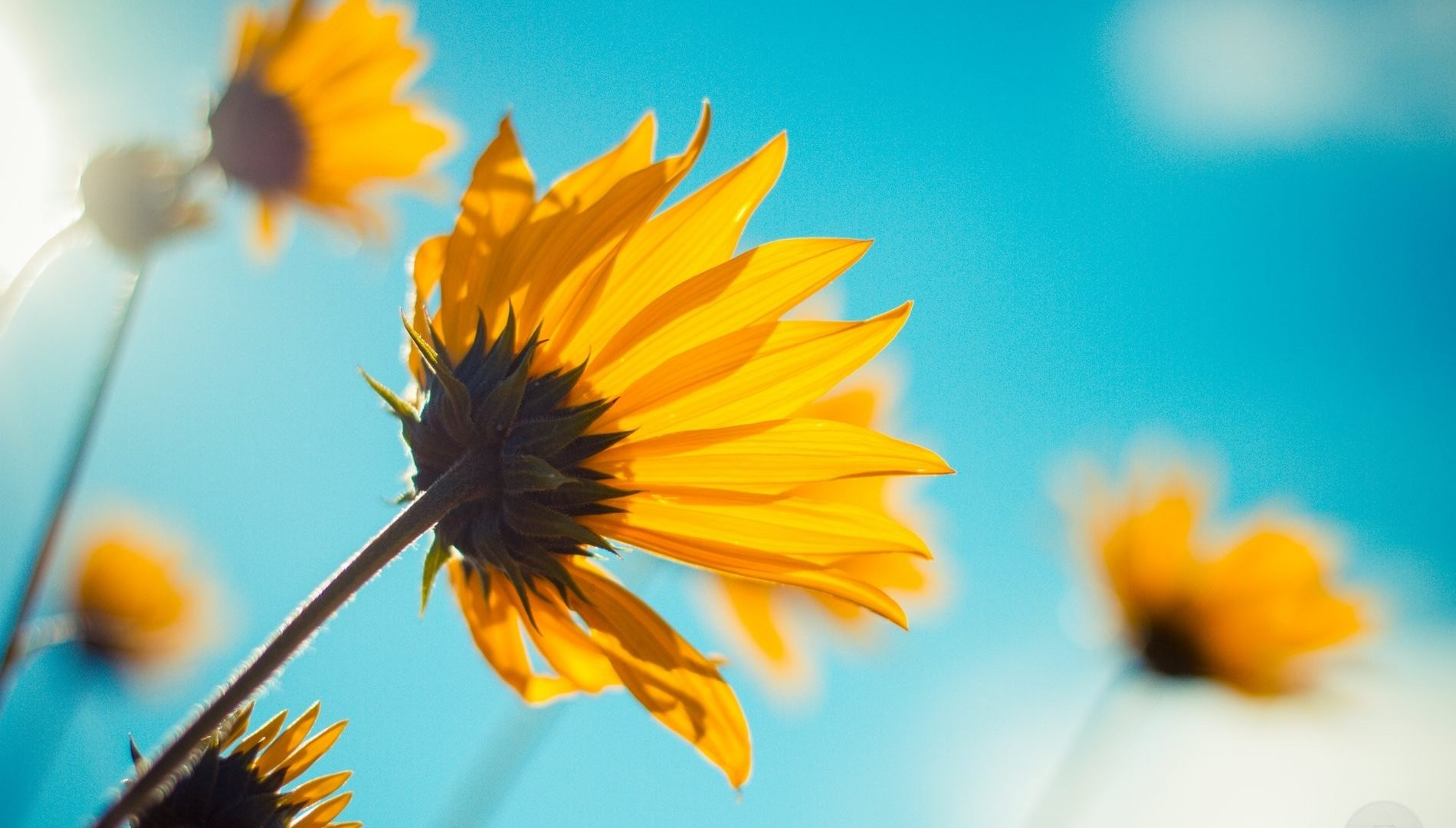 Sky Sunshine Happiness Flower Blue 3d Wallpapers Hd Nature